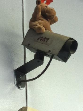 Decoy camera