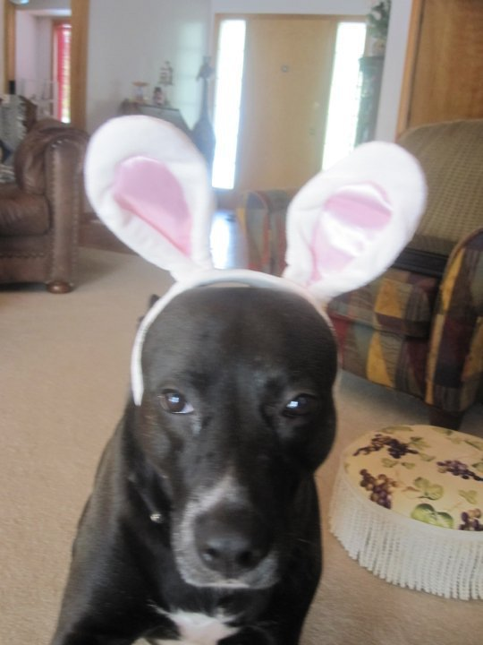 The Easter Dog